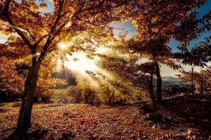 Бесплатные фото осень,лучи солнца,деревья,холмы,пейзаж