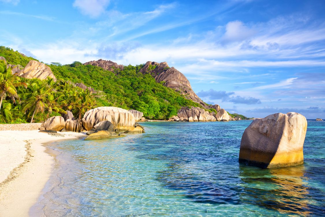 Фото Сейшельские острова пальмы пейзаж - бесплатные картинки на Fonwall