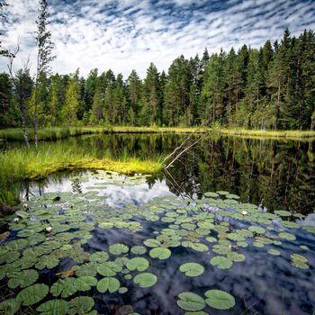 Красивые картинки озеро, лес скачать бесплатно