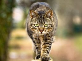 Кот идущий по забору