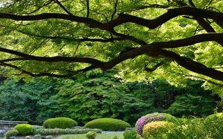 Фото бесплатно лето, парк, трава