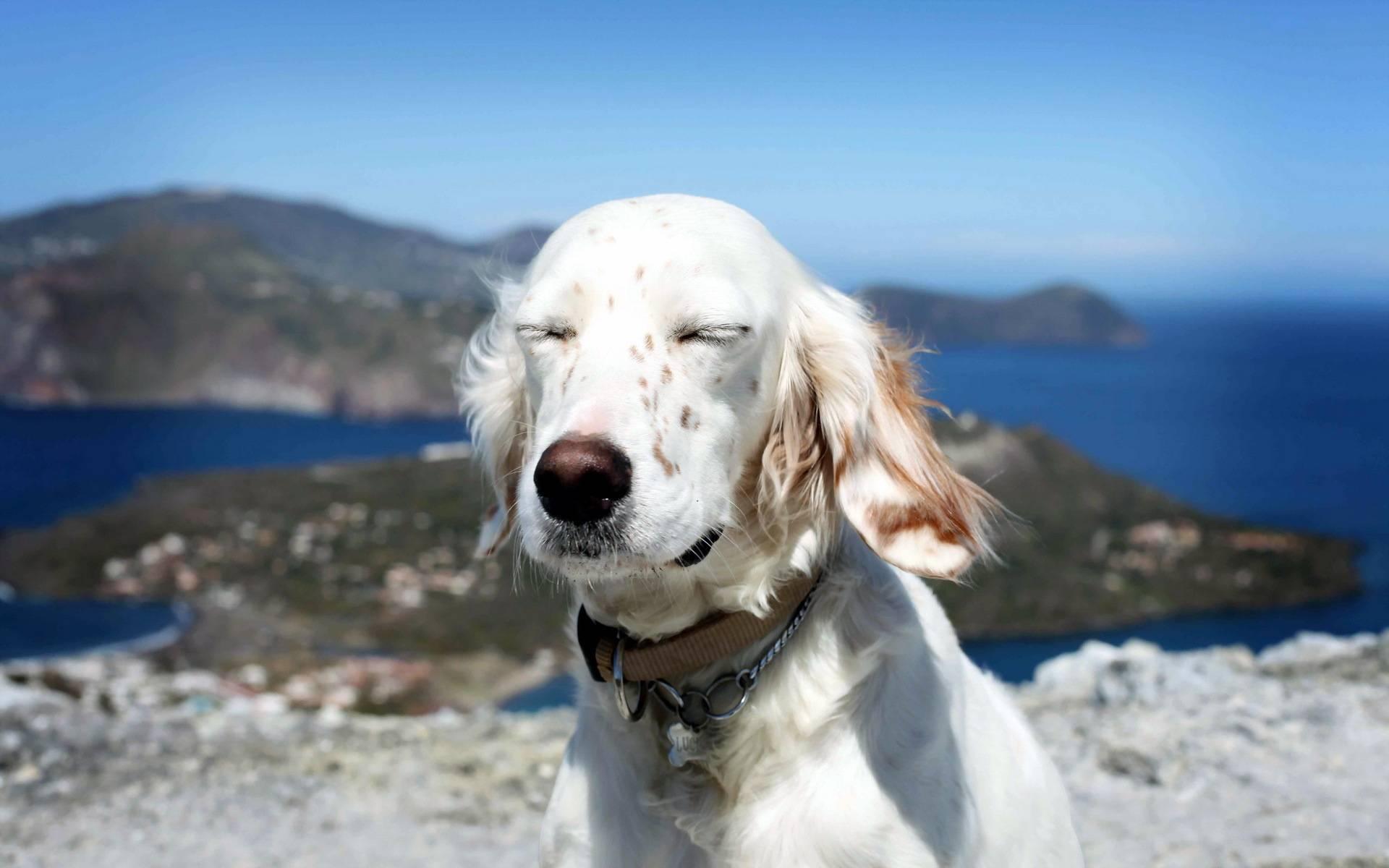 Обои пес в горах