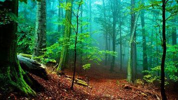 Фото бесплатно лес, деревья, мох, листва, ветки, коряги