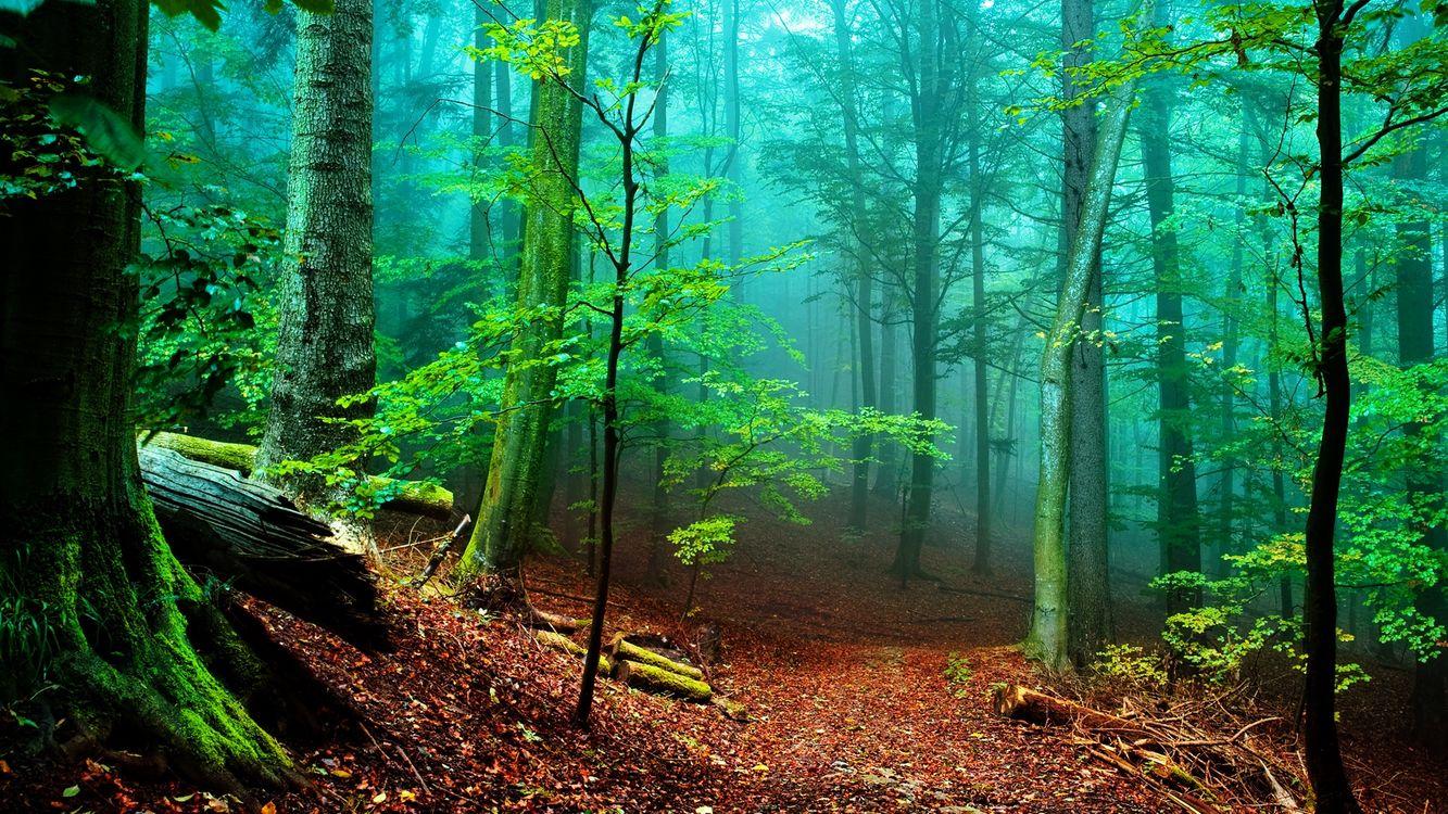 Фото бесплатно лес, деревья, мох, листва, ветки, коряги, природа
