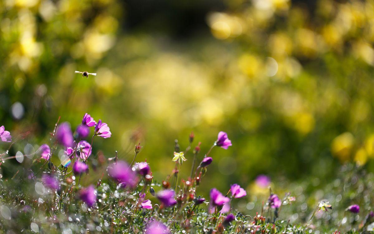 Фото бесплатно пчела, цветки, трава, макро, насекомые - скачать на рабочий стол