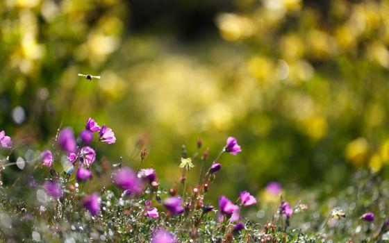 Фото бесплатно пчела, цветки, трава