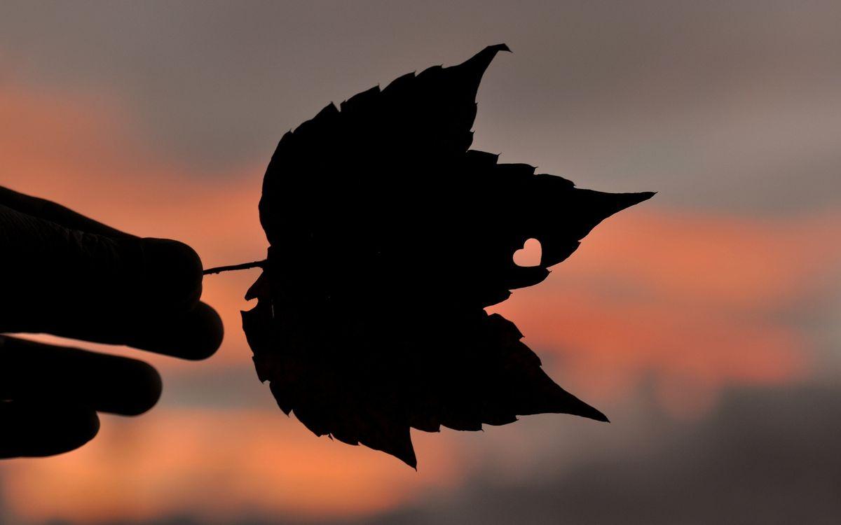 Фото бесплатно вечер, рука, лист, сердечко, сделано природой, разное