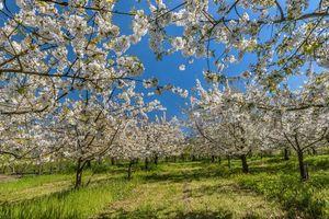 Бесплатные фото весна,сад,деревья,цветение,природа