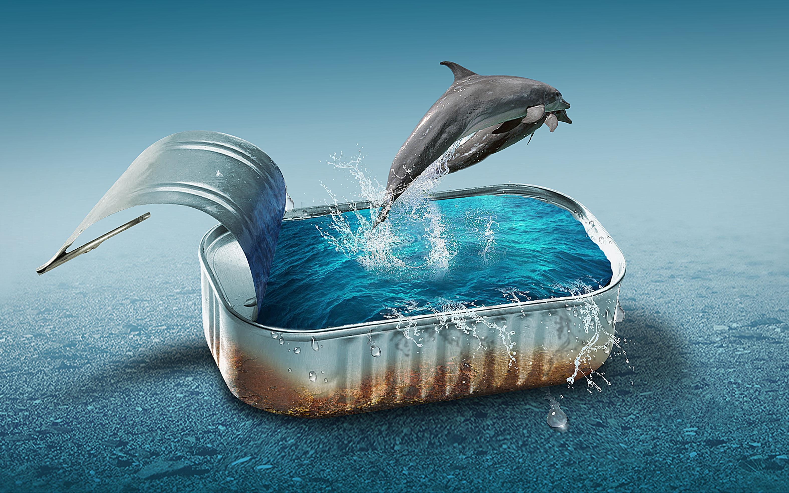 Обои банка, вода, дельфины