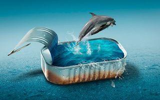 Фото бесплатно банка, вода, дельфины