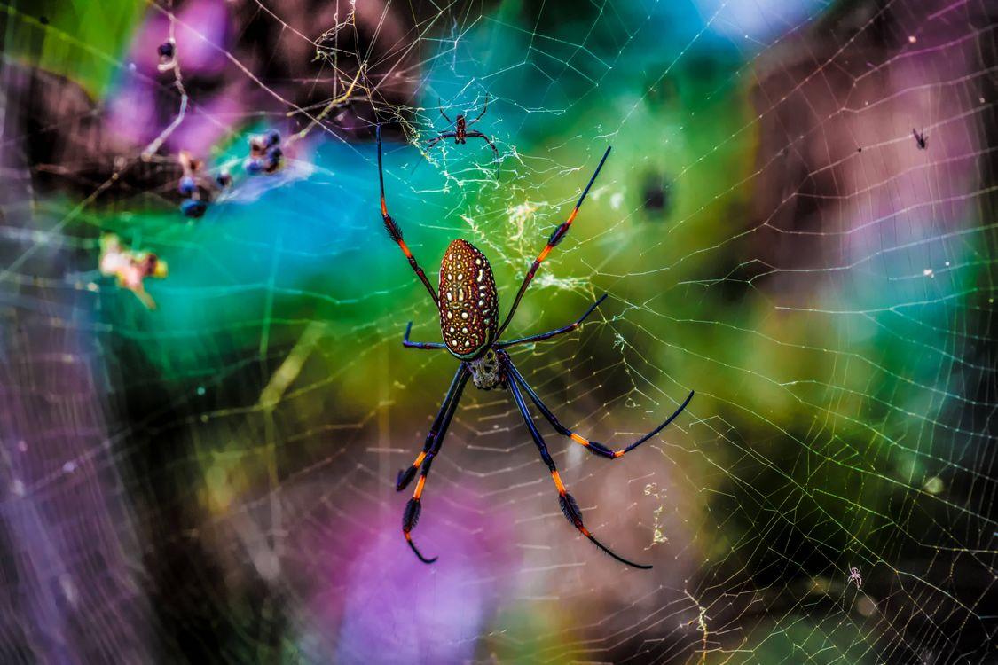 Фото паук паутина макро - бесплатные картинки на Fonwall