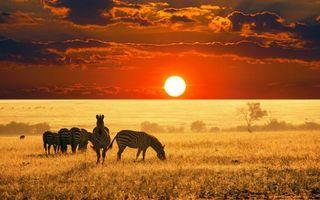 Бесплатные фото савана,зебры,трава,деревья,горизонт,солнце,закат