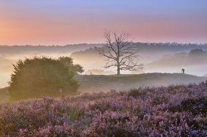 Бесплатные фото закат, горы, холмы, цветы, лаванда, деревья, туман