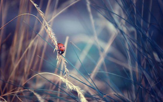 Бесплатные фото божья коровка,красная,лапки,трава