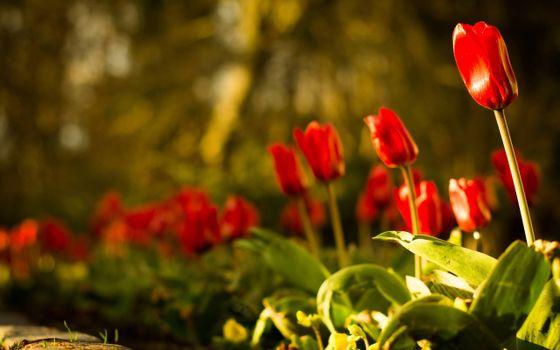 Фото бесплатно красивые, красочные цветы