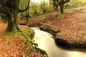 Бесплатные фото Лес,Hayedo de Otzarreta,Баскония,Страна Басков,Испания,речка,природа