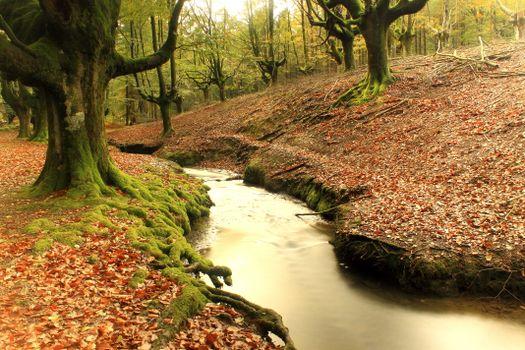 Фото бесплатно Страна Басков, Hayedo de Otzarreta, Испания