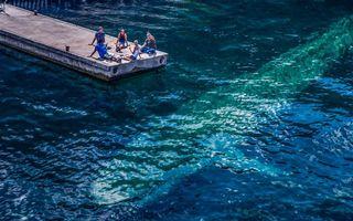 Фото бесплатно мостик, океан, силуэт