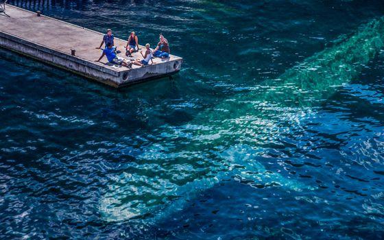 Бесплатные фото мостик,океан,силуэт,кит,люди,компания