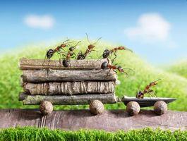 Бесплатные макро, насекомые красивые обои на рабочий стол
