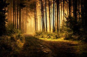 Фото бесплатно туман, арт, деревья