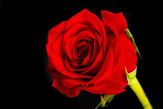 Фото бесплатно красные бутоны, красные розы, флора