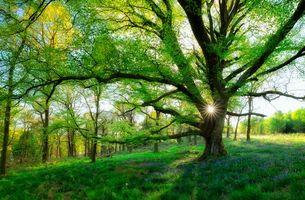 Заставки Шотландия,лес,поляна,дерево,качели,пейзаж