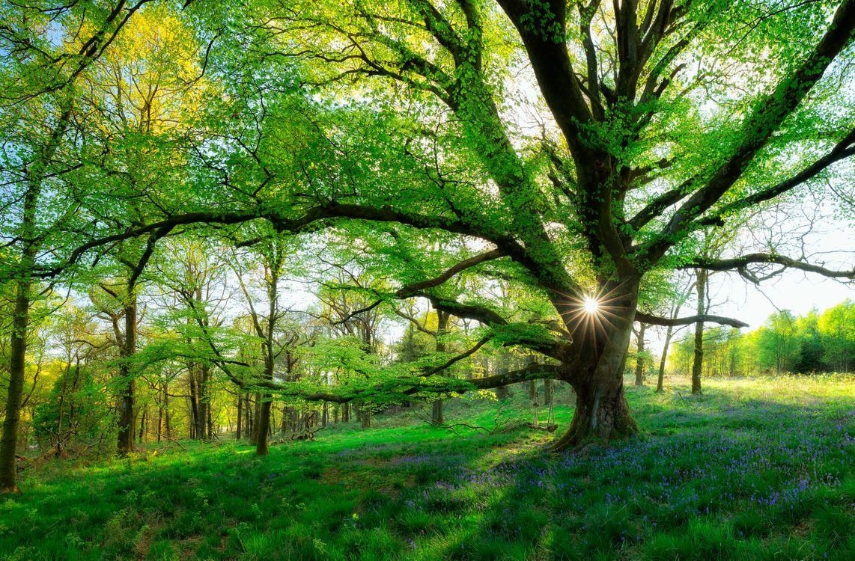 Фото бесплатно Шотландия, лес, поляна, дерево, качели, пейзаж, пейзажи - скачать на рабочий стол