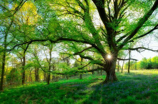 Фото бесплатно Шотландия, лес, поляна