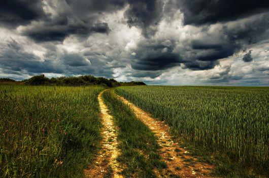 Фото бесплатно поле, колосья, дорога