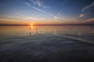 Бесплатные фото закат, море, птицы