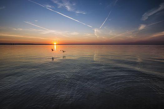 Фото бесплатно закат, море, птицы