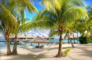 Photo free palm trees and beach, vacation