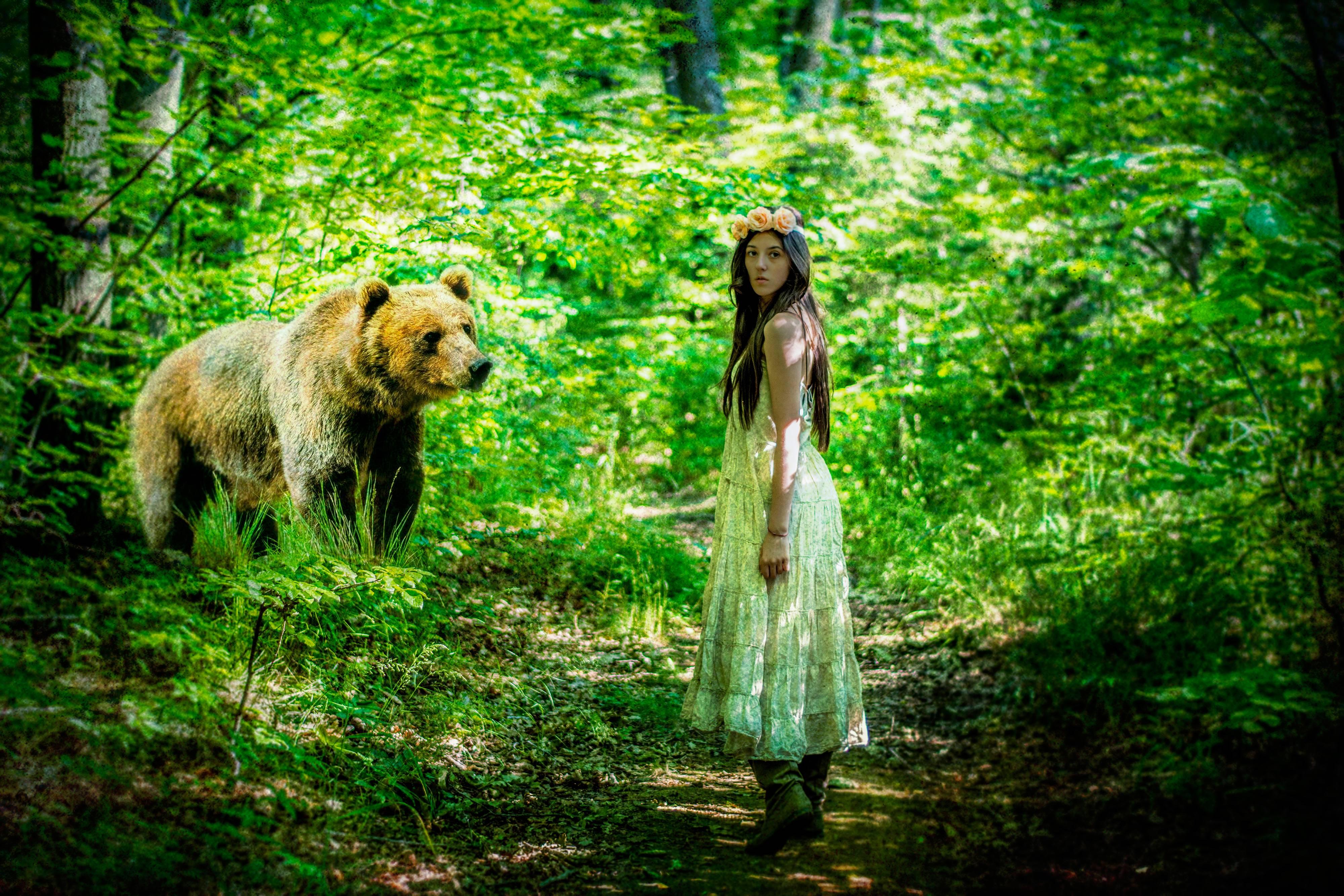медведь, лес, девушка