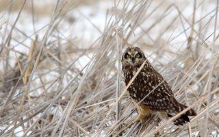 Бесплатные фото сова,клюв,глаза желтые,перья,лапы,трава