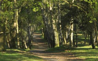 Бесплатные фото лето,парк,деревья,трава,тропинка