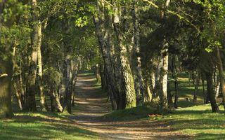 Фото бесплатно лето, парк, деревья, трава, тропинка