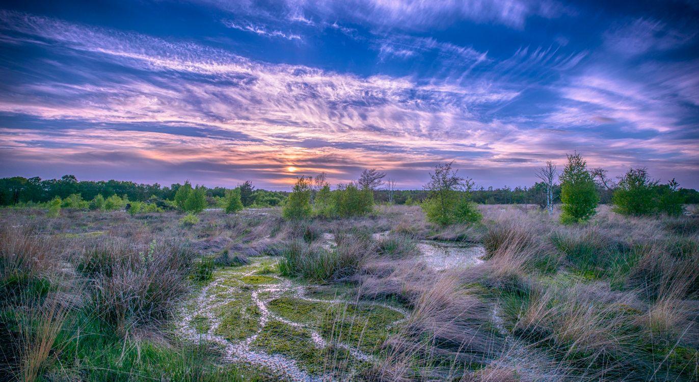 Фото бесплатно закат, болото, деревья - на рабочий стол