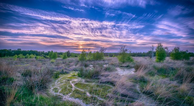 Бесплатные фото закат,болото,деревья,пейзаж