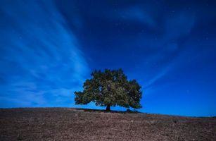 Заставки ночь, поле, холм, дерево, пейзаж