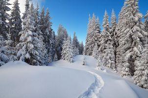 Фото бесплатно снег, тропинка, сугробы