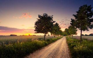 Фото бесплатно поля, небо, деревья