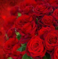 Бесплатные фото розы, букет, бутоны