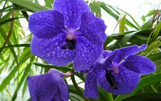 Бесплатные фото цветочки,лепестки,синие,трава,листья,зеленые