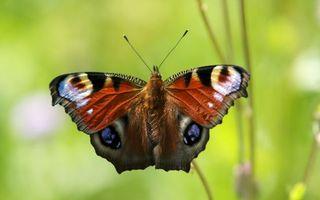 Бесплатные фото бабочка,крылья,узор,окрас,усики,трава