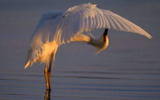 Бесплатные фото цапля,белая,крылья,перья,клюв,лапы,водоем