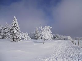 Бесплатные фото зима,снег,деревья,сугробы,дорога,пейзаж