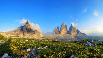 Фото бесплатно горы, трава, цветы