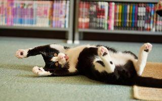Фото бесплатно кот, играется, морда