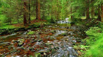 Бесплатные фото лес, деревья, речка, камни, природа